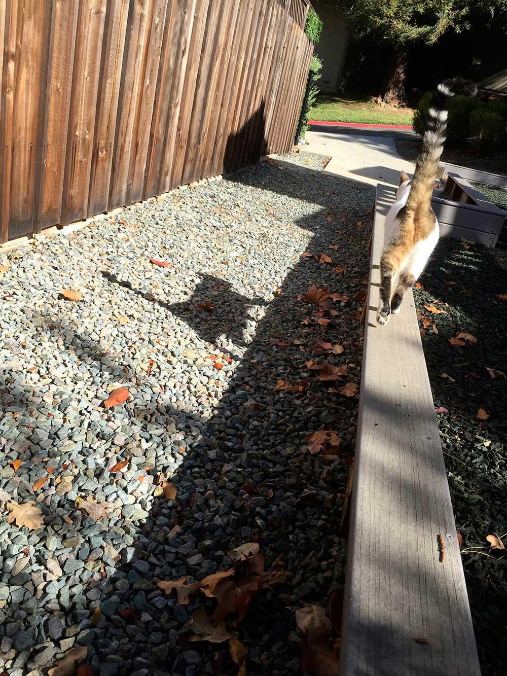 sunshine the cat 8