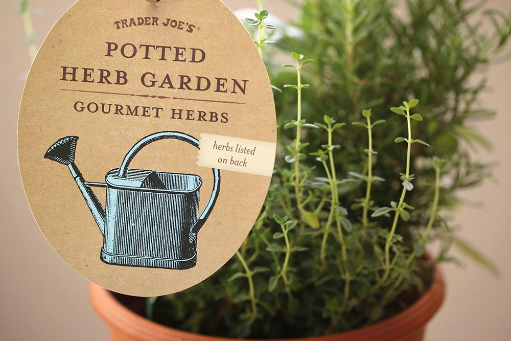 trader-joes-potted-herb-garden-1