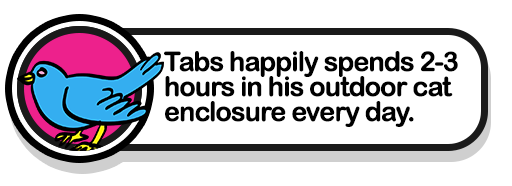 tabs-bird-cat-enclosure