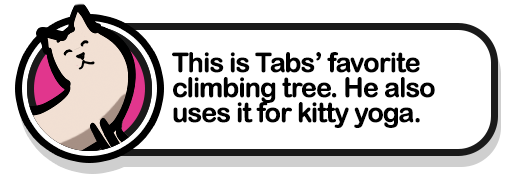 tabs-kitty-climbing-tree-popup