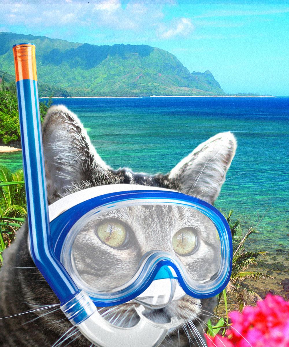 tabs-snorkeling-hawaii
