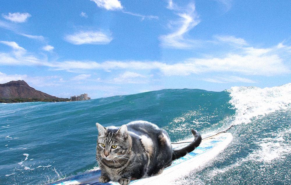 tabs-waikiki-hawaii-surfing