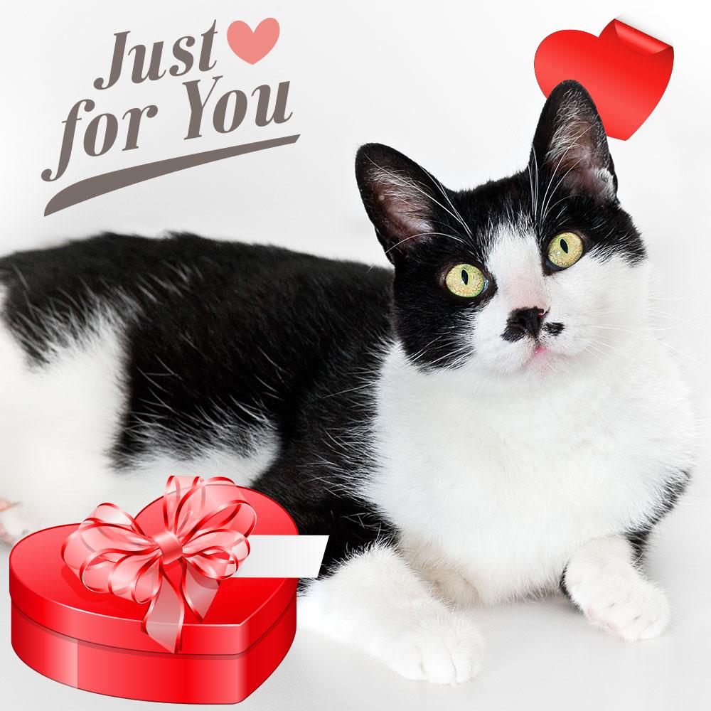 black-white-cat-valentine