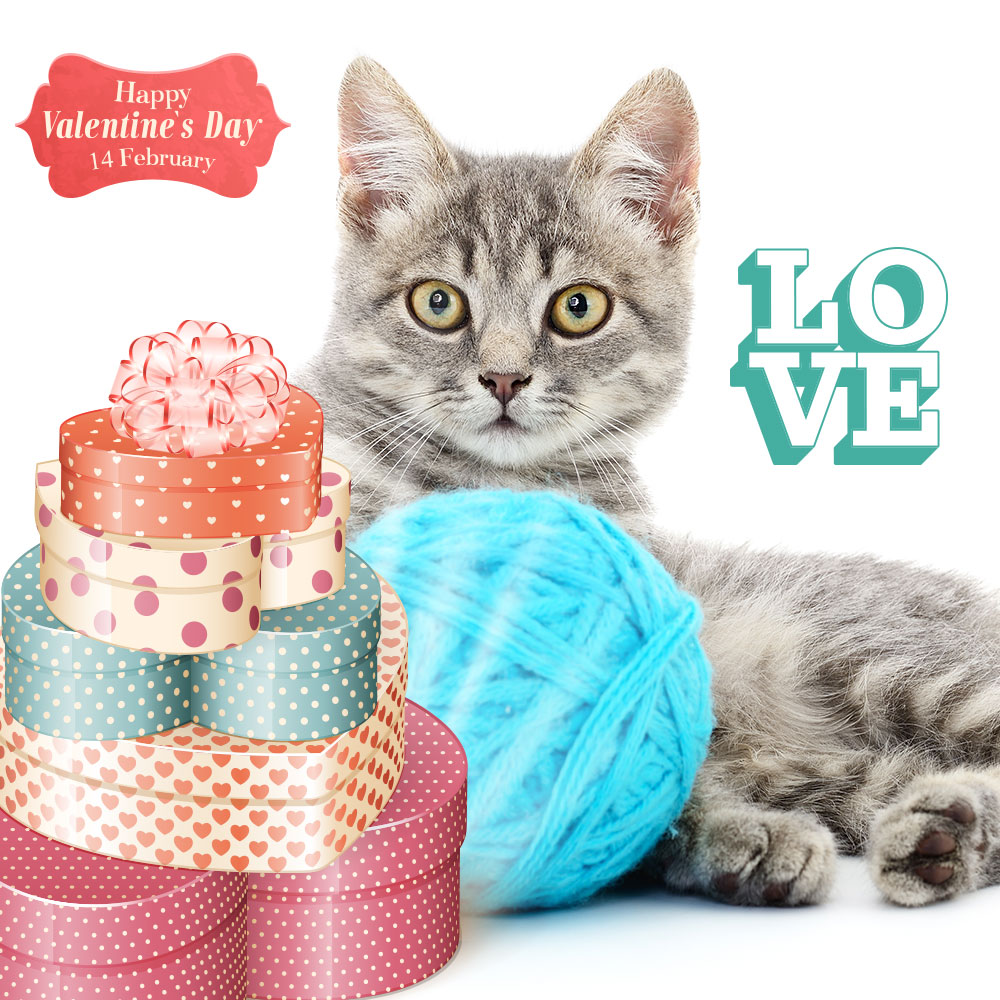 gray-cat-valentine