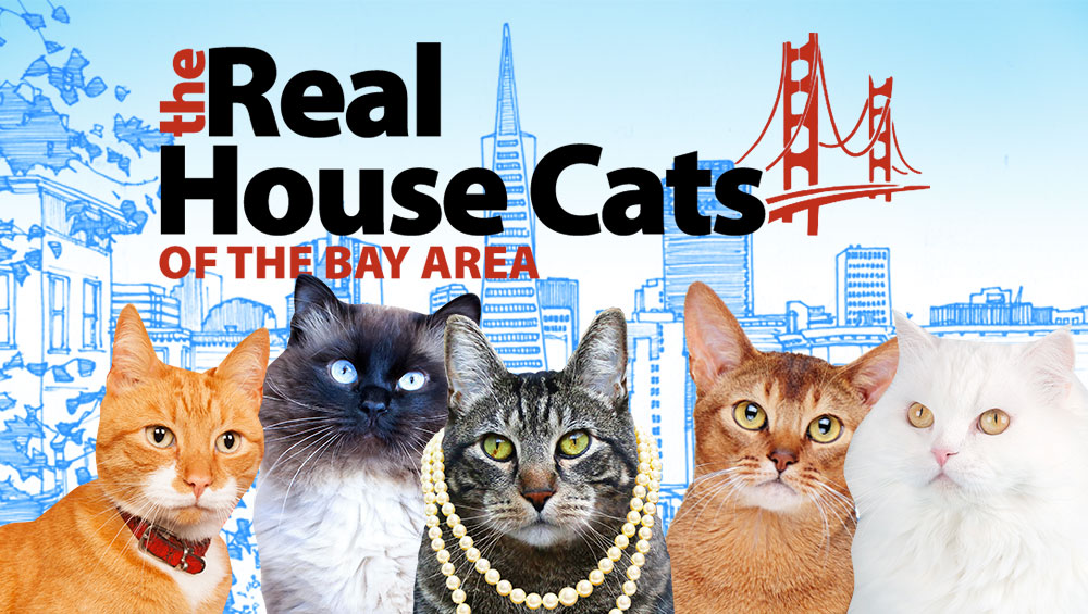 tabs-real-housecats-of-bay-area