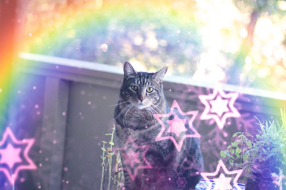 tabs-rainbow-modeling-pose