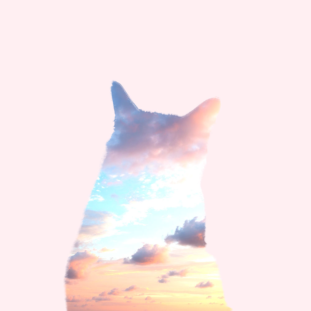 tabs-cat-silhouette-sky-outside