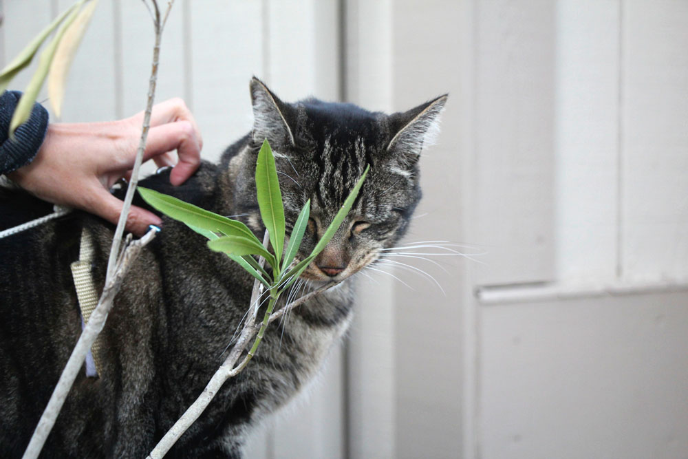 tabs-cat-sniffing-leaves-spring-2016
