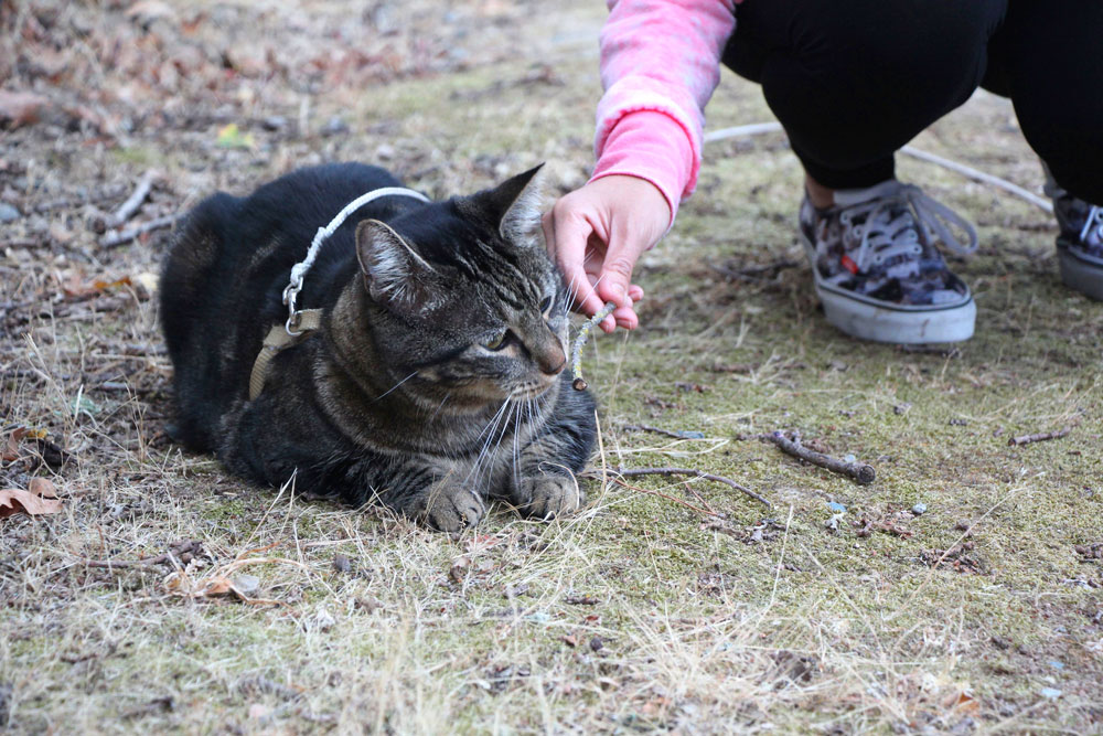 tabs-cat-sniffing-twig-spring-2016