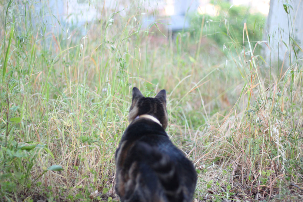 tabs-field-staring-spring-2016