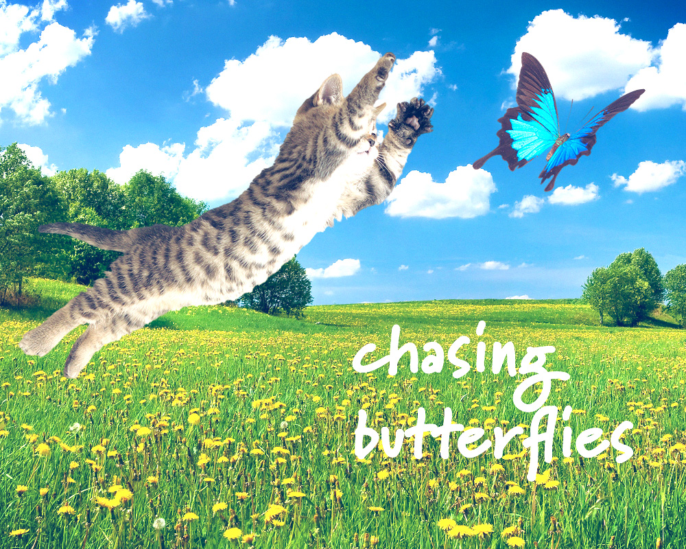 tabs-cat-camp-chasing-butterflies