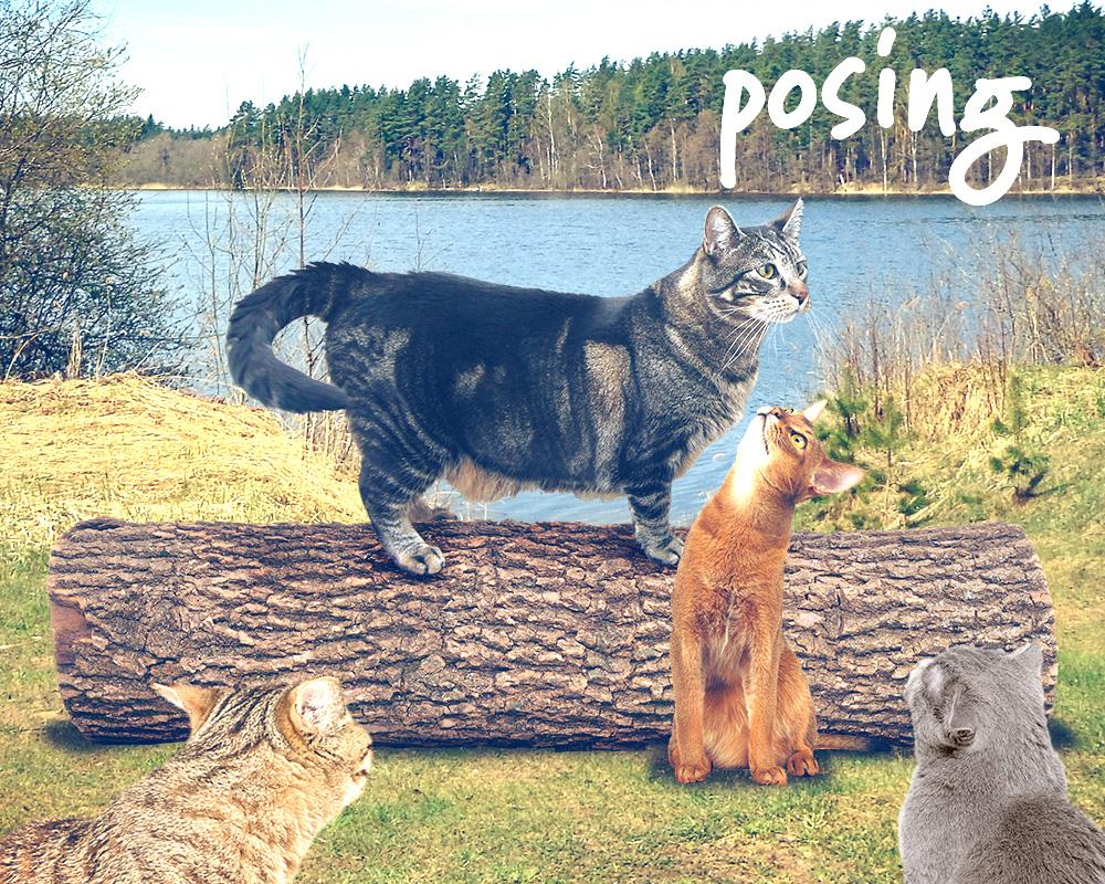 tabs-cat-camp-log-modeling