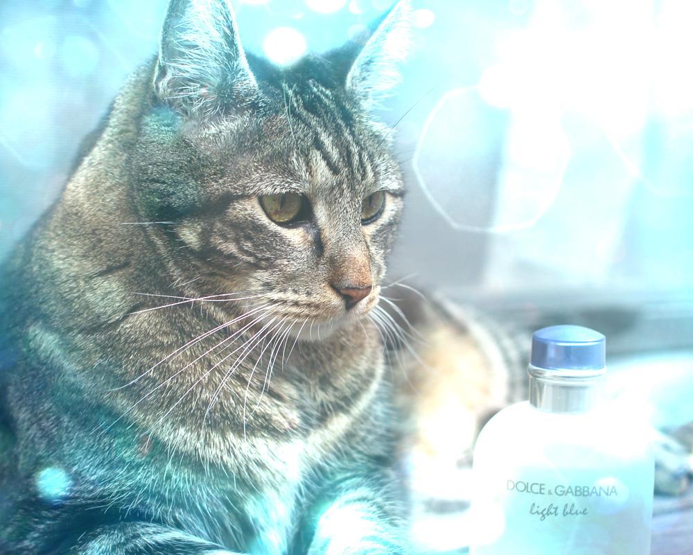 tabs-cat-dolce-gabbana-light-blue