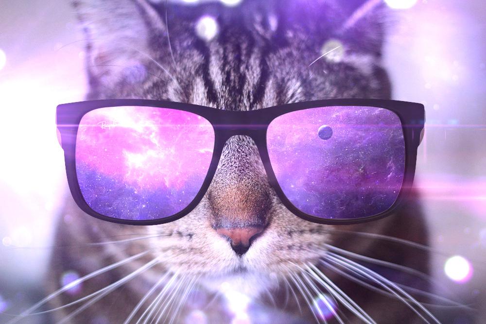 tabs-cat-sunglasses-cool