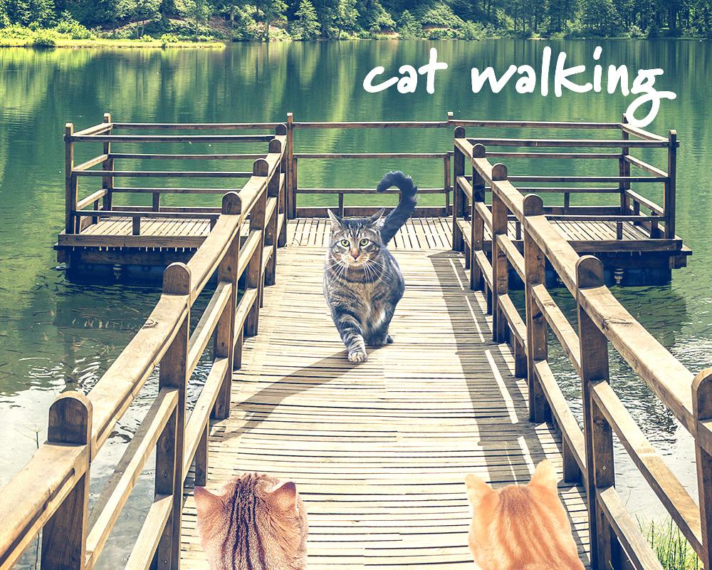 tabs-pier-catwalk-camp