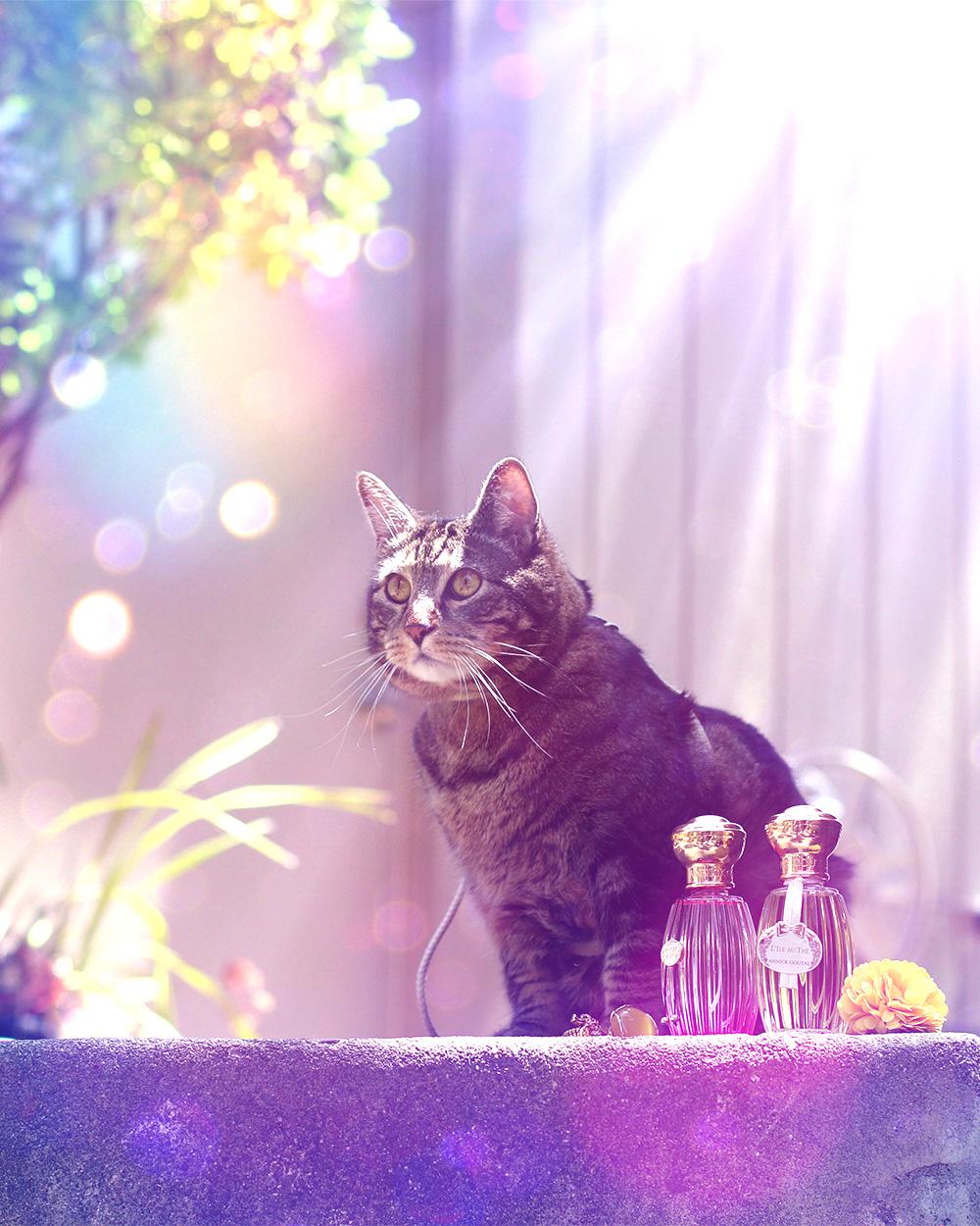 tabs-summer-2016-cat-modeling-perfume-3