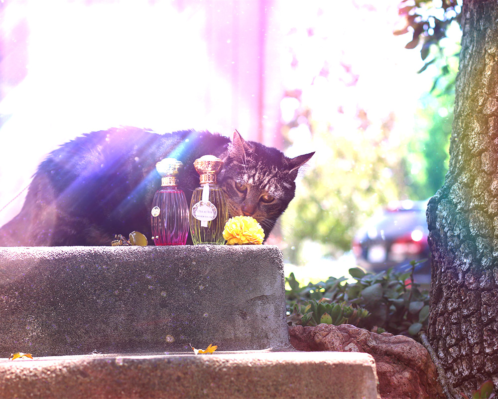 tabs-summer-2016-cat-modeling-perfume