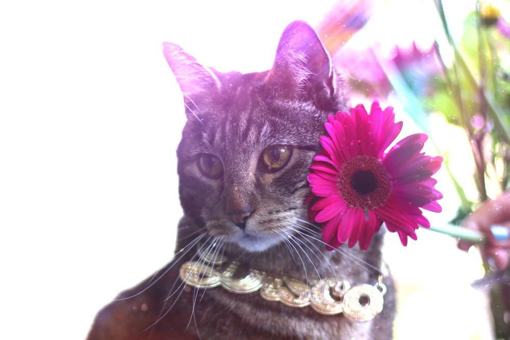 tabs-summer-2016-disco-cat-2