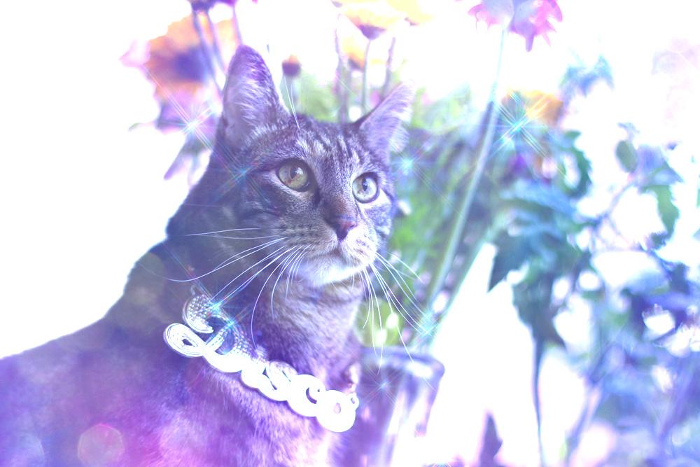 tabs-summer-2016-disco-cat