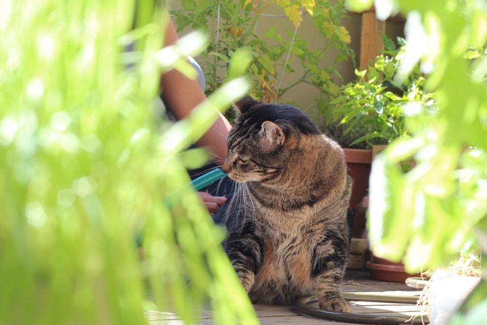 tabs-cat-gardening-3