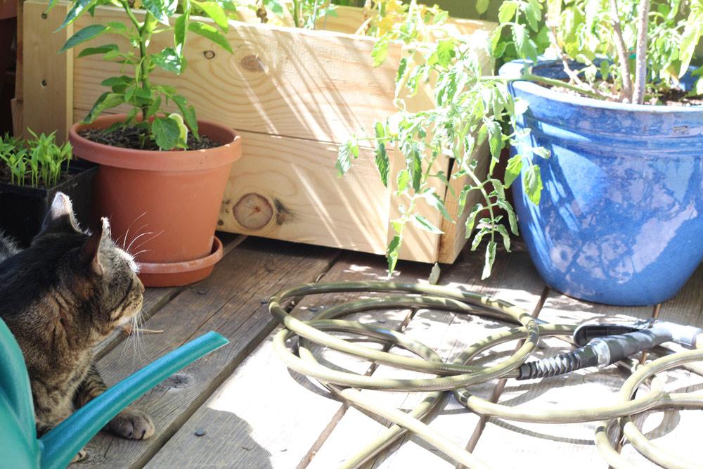 tabs-cat-gardening-4