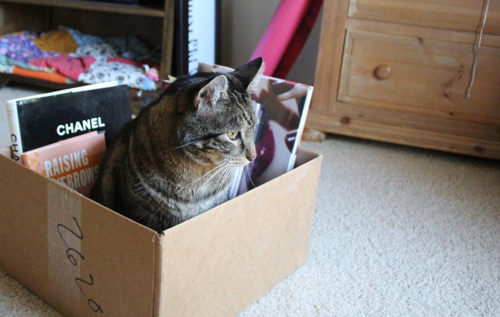 tabs-cat-gardening-cardboard-boxes-5
