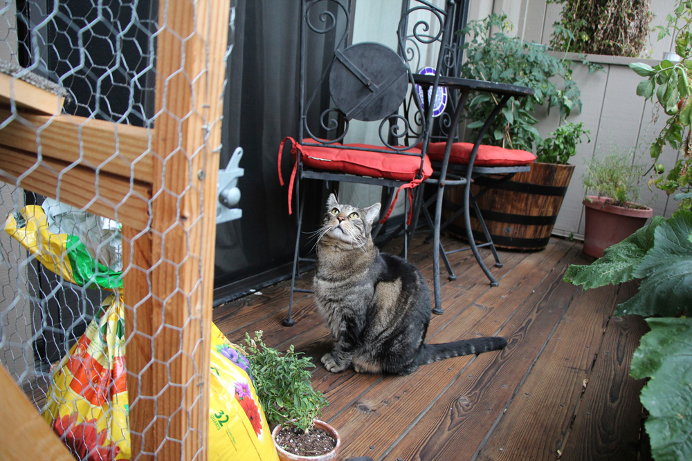 tabs-cat-outside-cat-enclosure-2