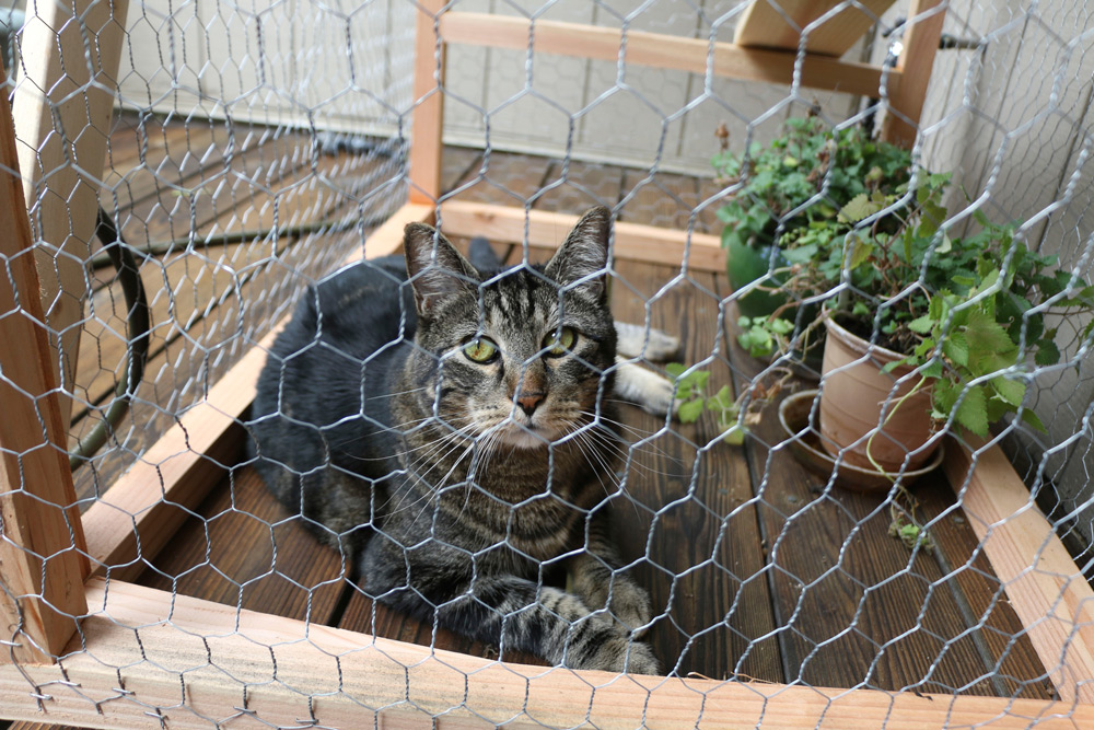 tabs-cat-outside-cat-enclosure-4