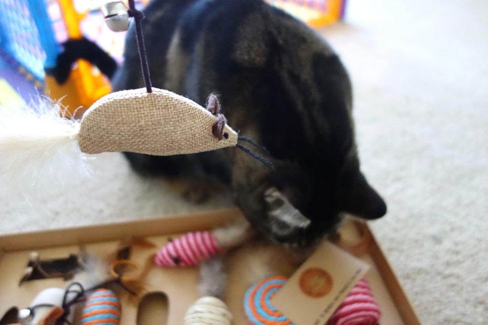 cat-natural-pet-company-review-6