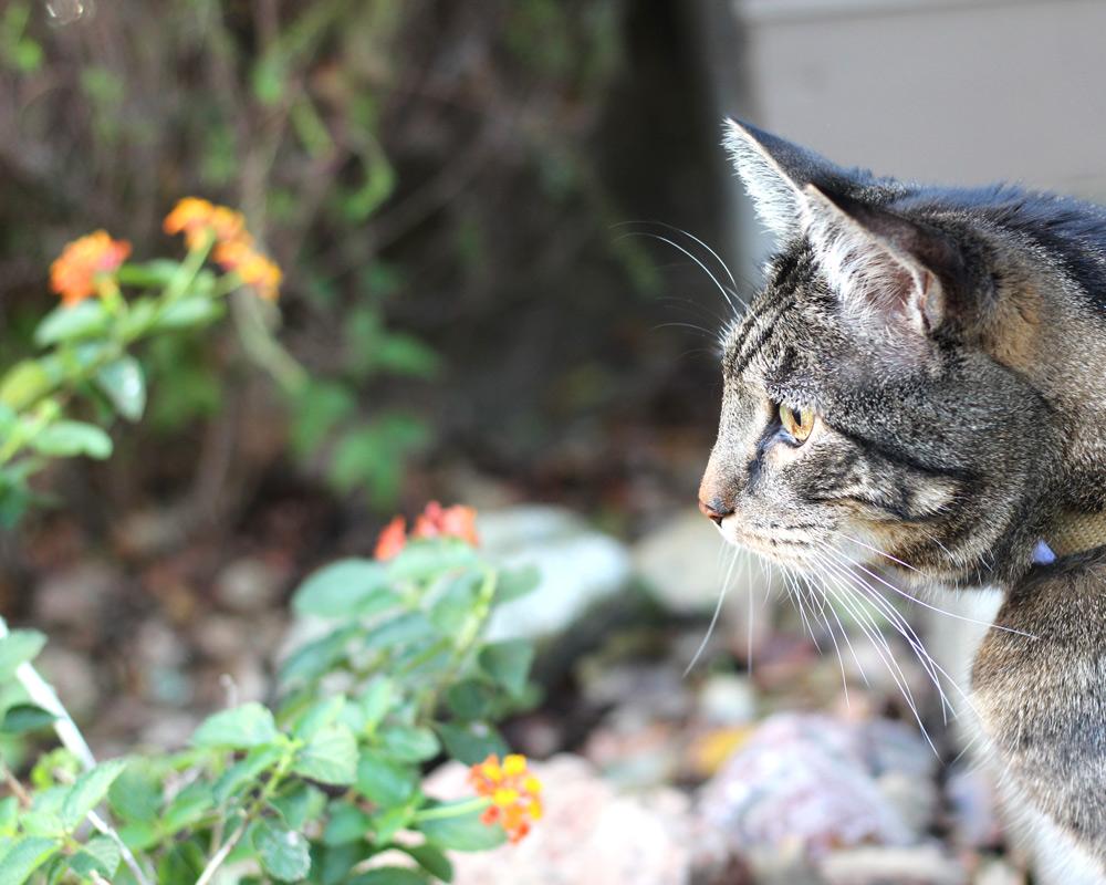 tabs-cat-thanksgiving-5