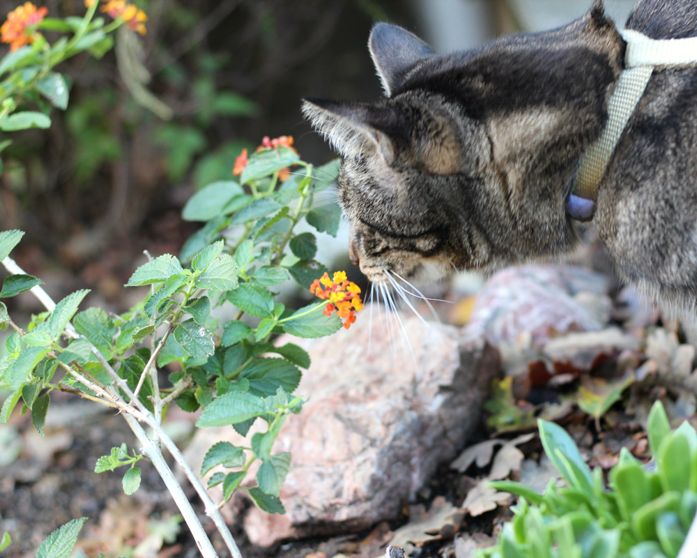 tabs-cat-thanksgiving-6