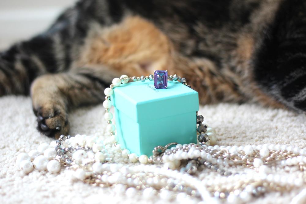 Tabs the cat, luxury feline diva