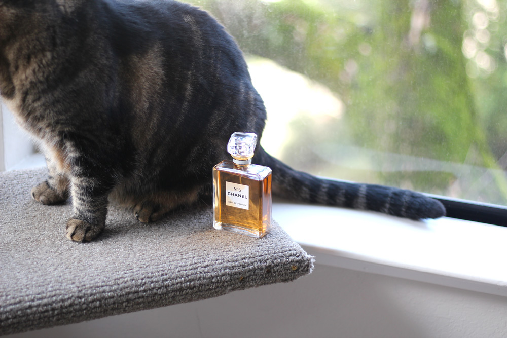 Chanel, for cats
