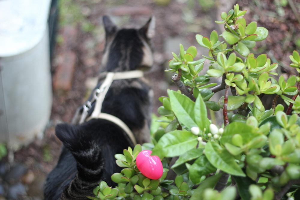 Kitty Easter Egg Hunt