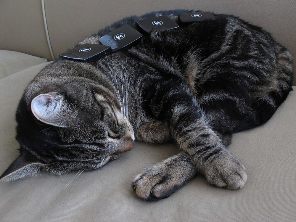 tabs sleeping on couch - If You Had Two Extra Hours Today (and You Weren't Already Completely Exhausted), What Would You Do With Them?