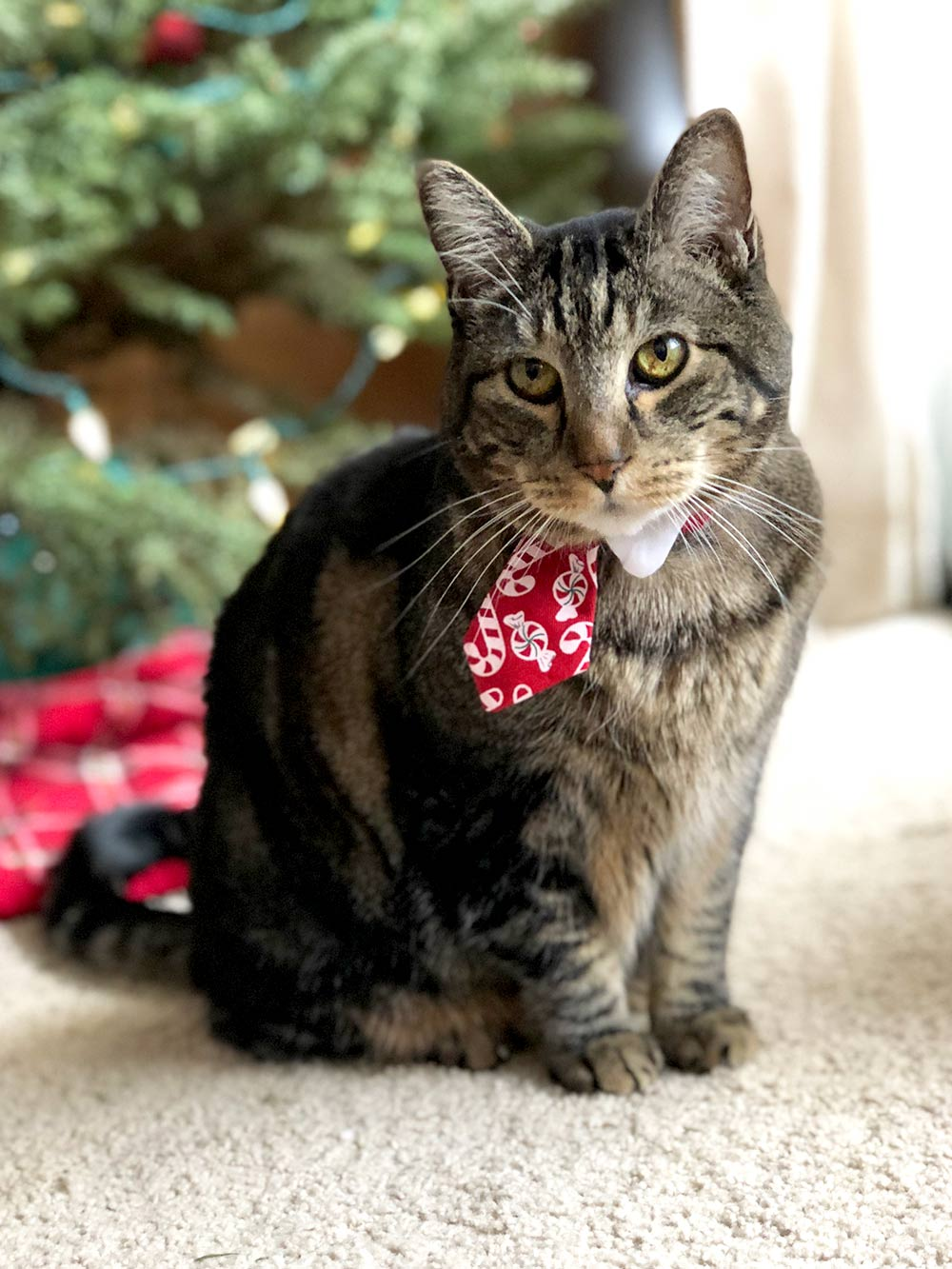tabs christmas 2017 tie left coy