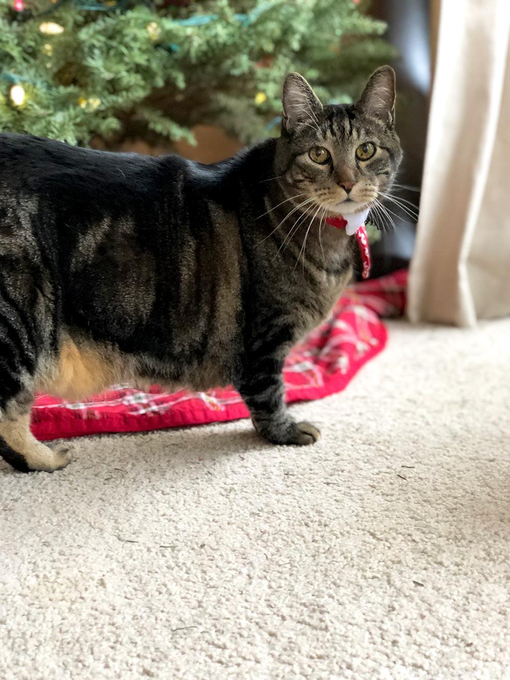 tabs christmas 2017 tummy