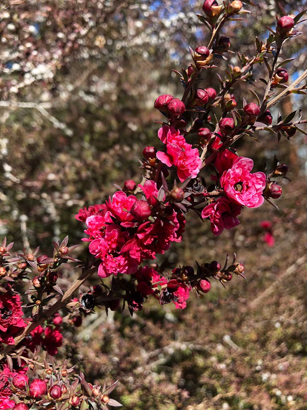 pink flowers spring