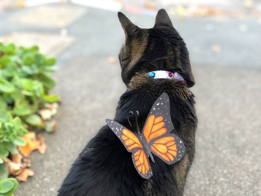 tabs monarch butterly cat costume bejeweled collar 13 - Sundays With Tabs the Cat, Makeup and Beauty Blog Mascot, Vol. 521