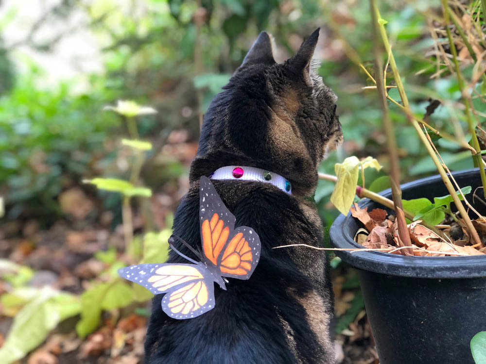 tabs monarch butterly cat costume bejeweled collar 2 - Sundays With Tabs the Cat, Makeup and Beauty Blog Mascot, Vol. 521