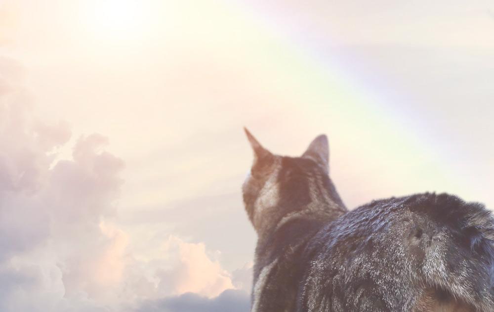 Angel kitty on the rainbow bridge