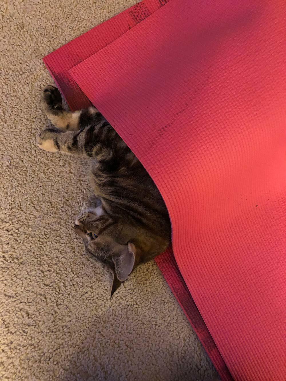 cat yoga mat burrito