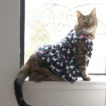 rosie cat dress