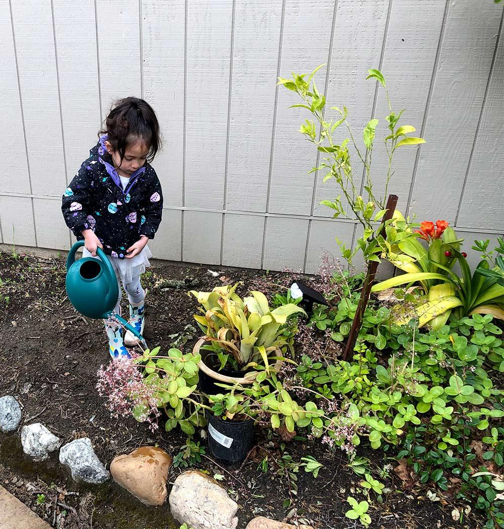 coycoy watering plants