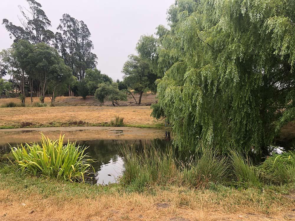 étang des fermes de duckworth