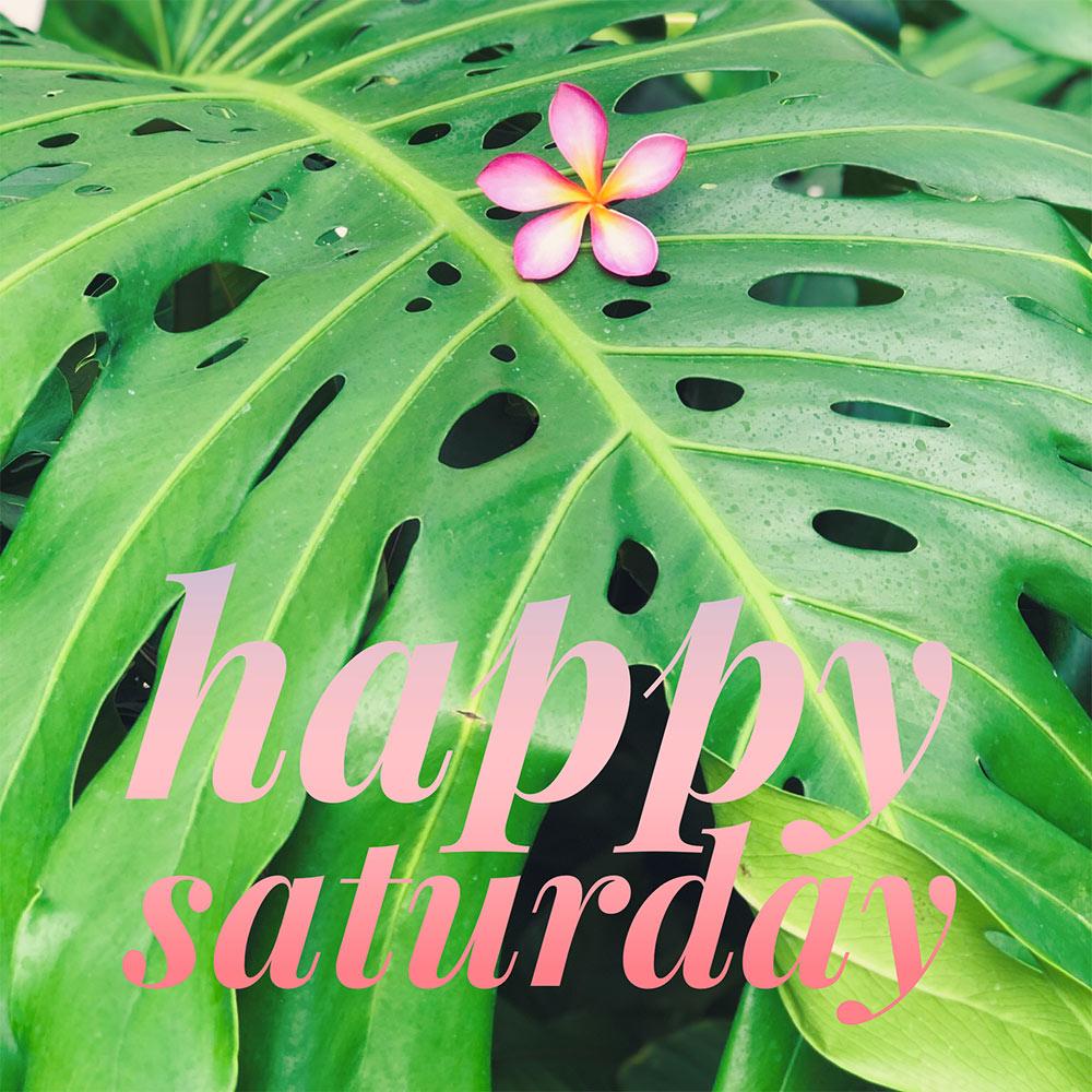 happy saturday big green leaf pink plumeria
