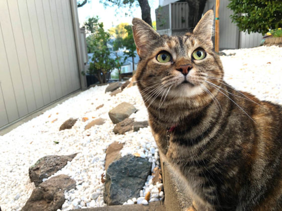 Sundays With Tabs the Cat, Makeup and Beauty Blog Mascot, Vol. 626