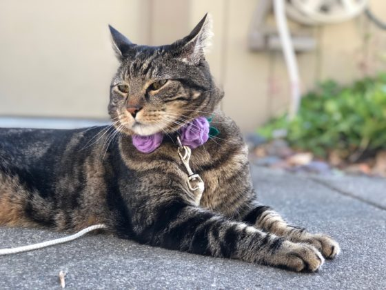 Sundays With Tabs the Cat, Makeup and Beauty Blog Mascot, Vol. 642