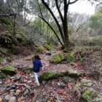 waterfall hike novato