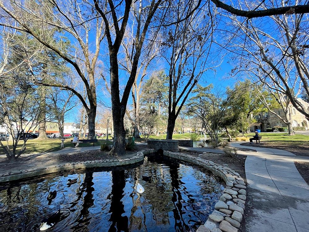 sonoma plaza duck pond